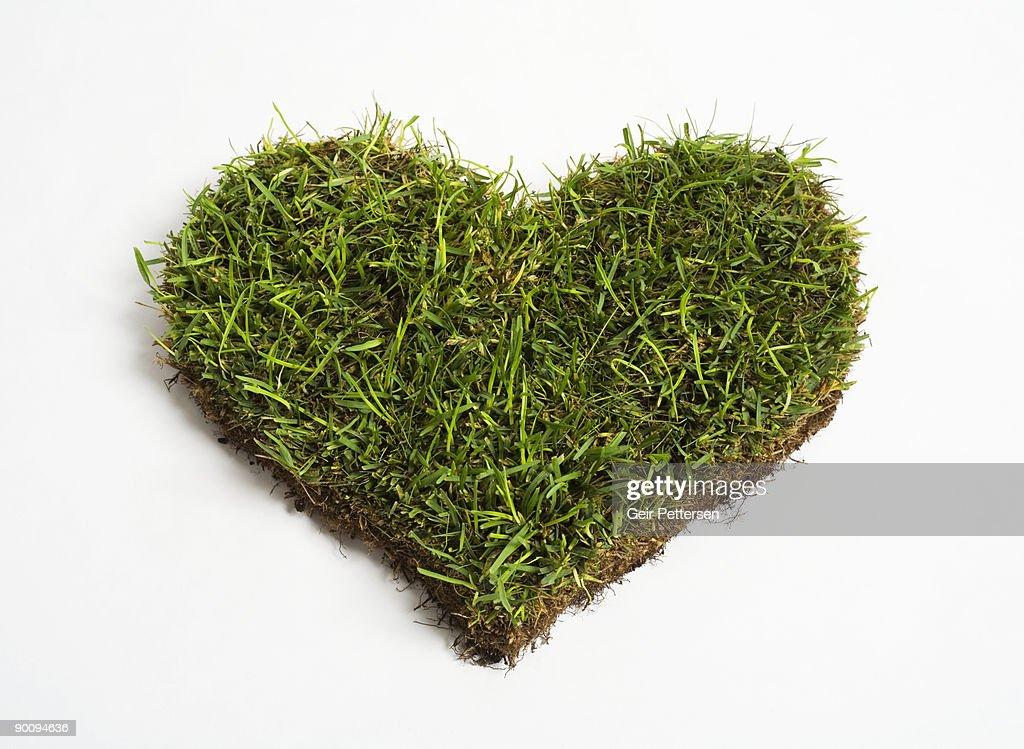 Green grass heart : Stock Photo