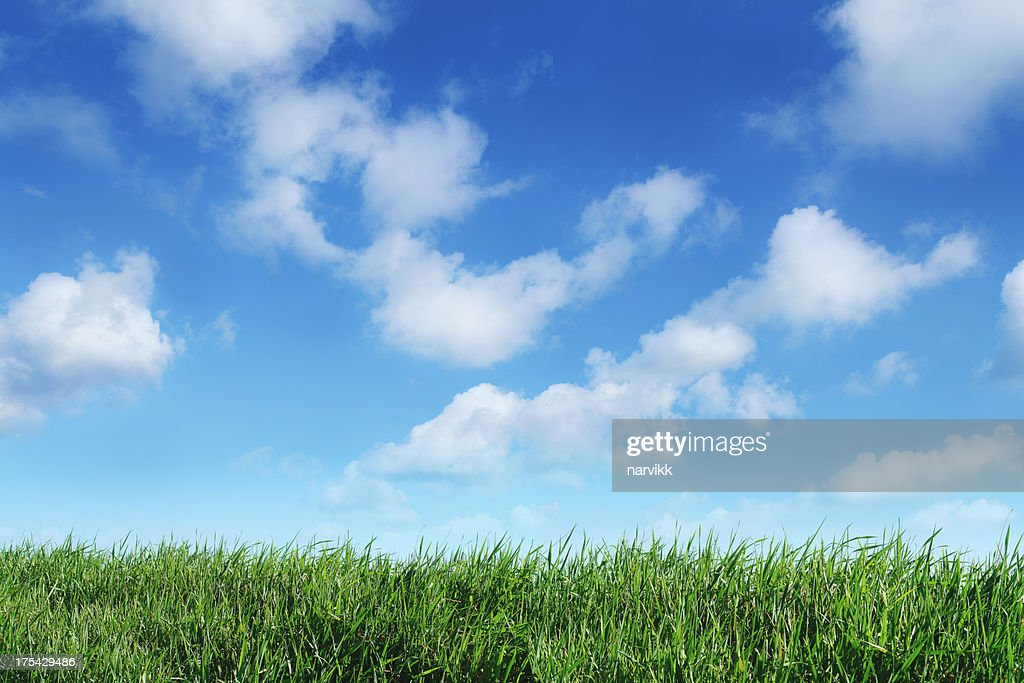 Green Grass Horizon With Blue Sky Background Stock Photo ...
