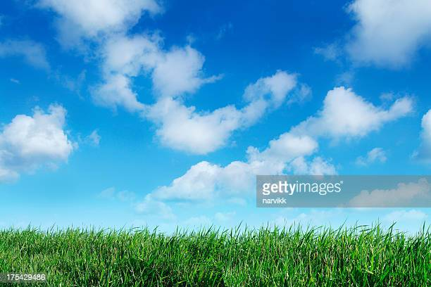 Green grass horizon with blue sky background