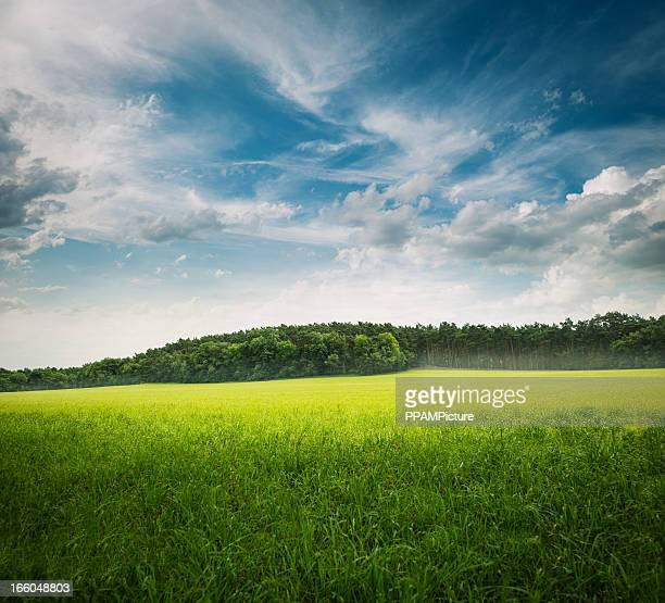 Grüne Gras Landschaft