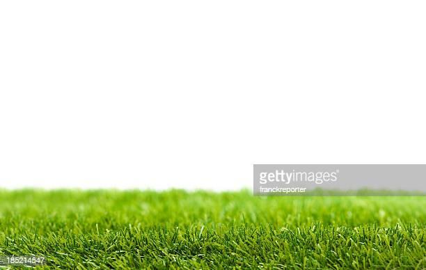 Feuilles d'herbe verte isolé sur blanc