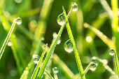 the green background from a grass on a lawn  close up