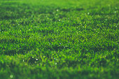Green grass on a sunny meadow summer morning sparkling dew water drops close up macro washed matte photo