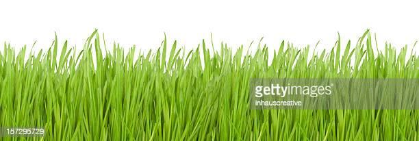 Grüne Gras (XXL)