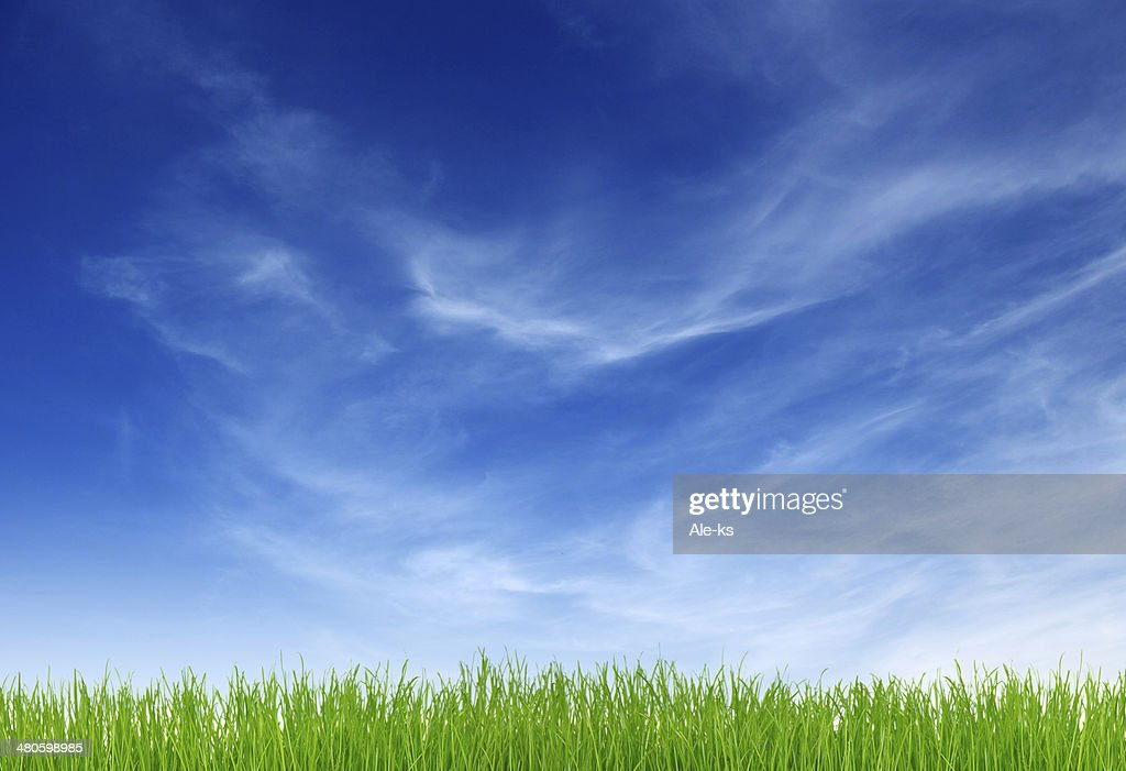 Green grass : Stock Photo