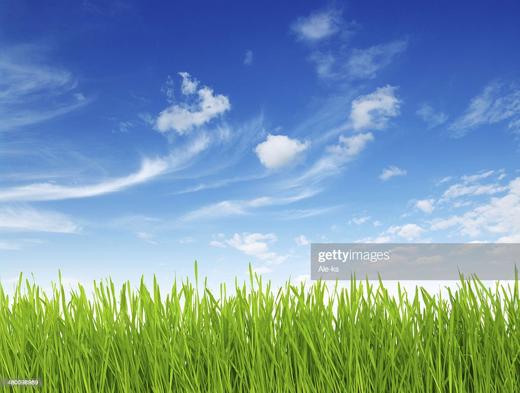 Green grass : Stock Photo