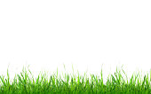 Green grass. Isolated on white background with copy space