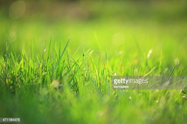 Grüne Gras, Geringe Tiefenschärfe