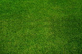 Green grass texture background, top view