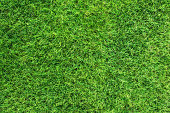 Close up photo of healthy green grass on playing field in very high resolution.