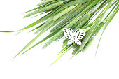 Green grass timothy-grass on a white background limited