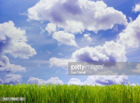 Green grass under cloudy sky (Digital Composite) : Foto stock