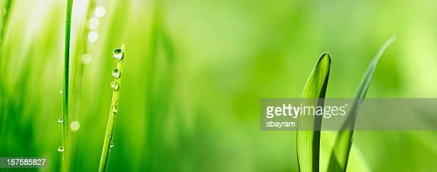 Green grass & Water drop (XXXL)