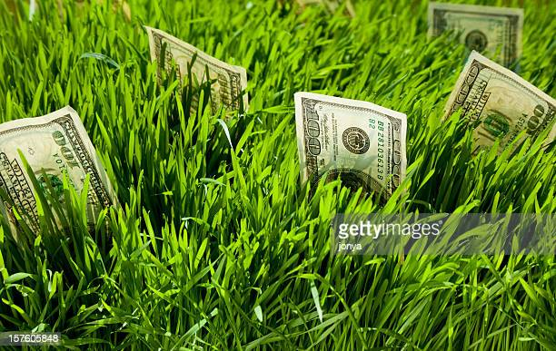 Green grass with money coming out of it