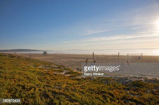 Green growth on dune above beach. : Stock Photo