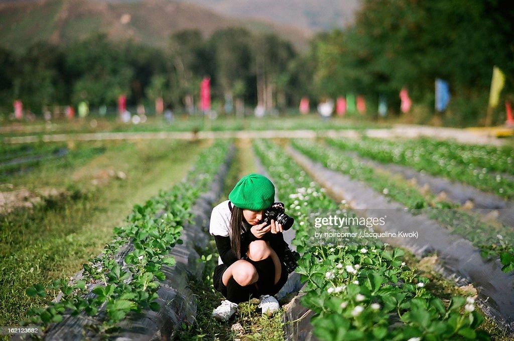 green hat green field : Stock Photo