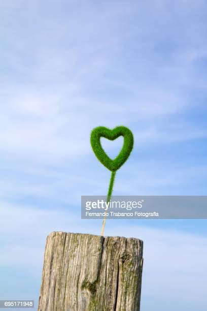 Green heart made of grass for Valentine's Day gift