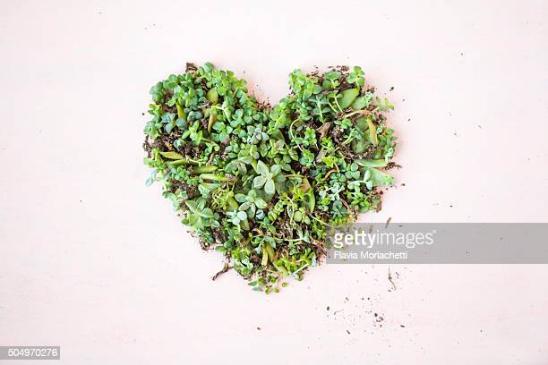 Green heart made of succulent plants