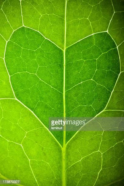 Green cœur