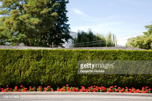 Green hedge and flowers