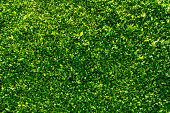 Green Hedge Backgrounds or Wallpaper