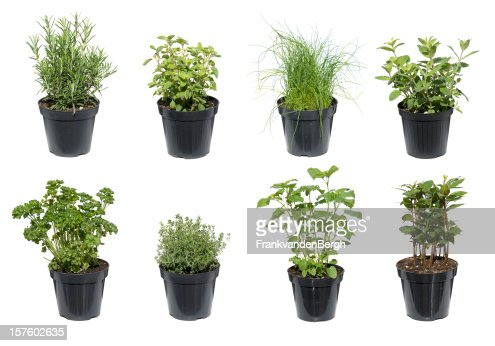 Green Herbs isolated on white