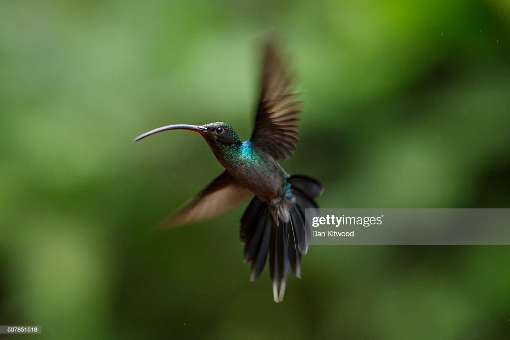 Hummingbird Eyesight and Coloration | Ask A Biologist