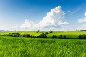 Green hill in summer