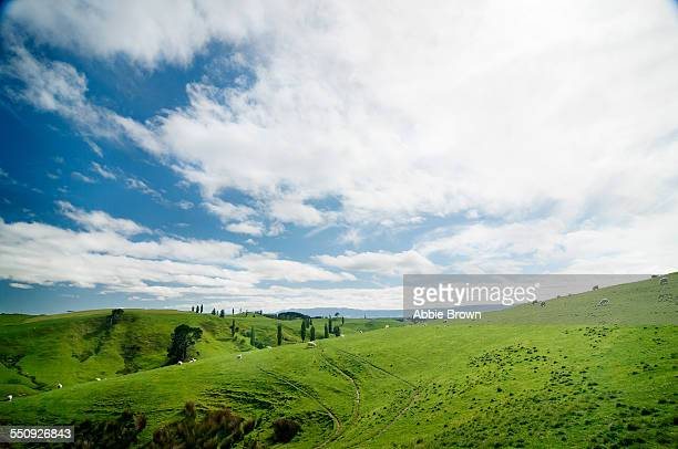 Green hills and fields