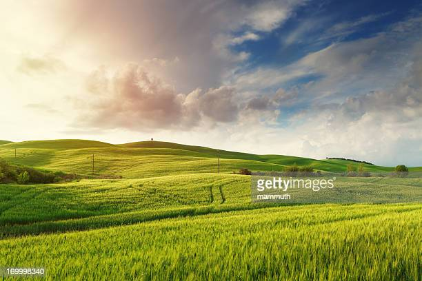 Green hills of Tuscany at sunset