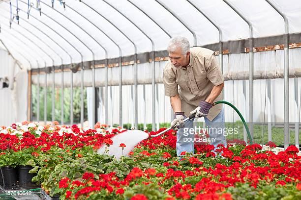 Green house Gardening