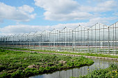 Dutch green house in sunlight with blue sky and clouds, with ditch and meadow.