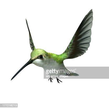A green hummingbird flying on white