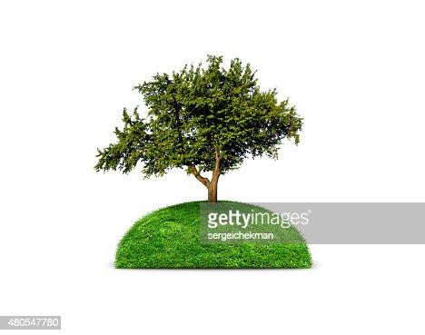 Green isolated tree : Stock Photo