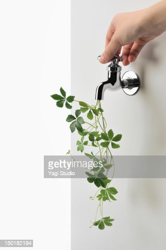 Green ivy and faucet : Stock Photo