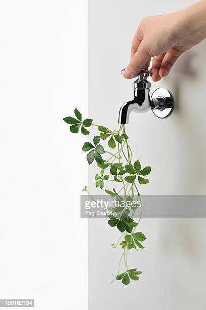 Green ivy and faucet