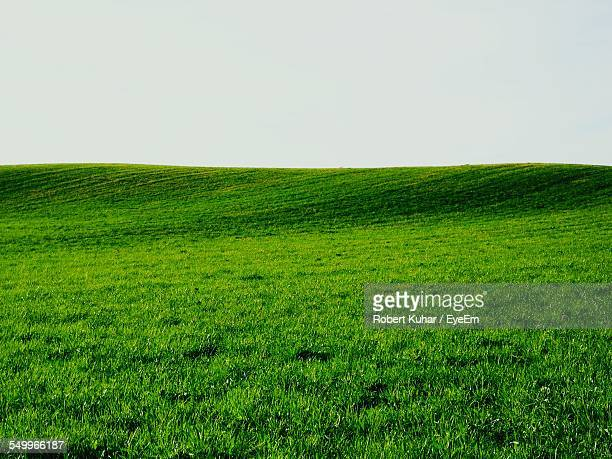 Green Landscape Against Clear Sky