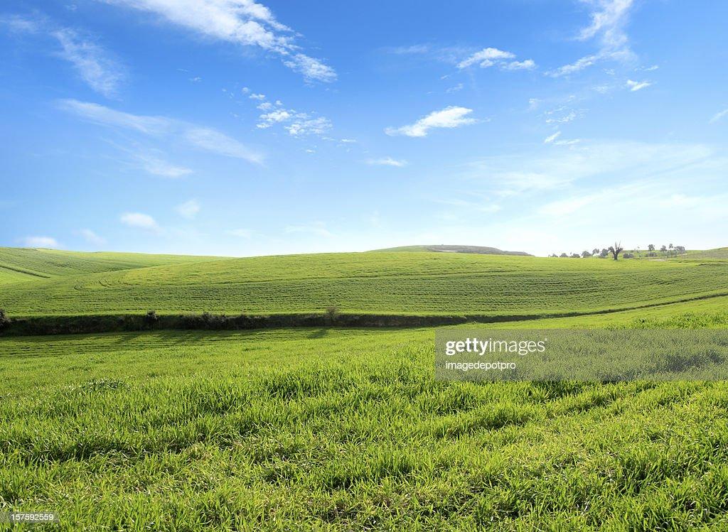green landscape : Stock Photo