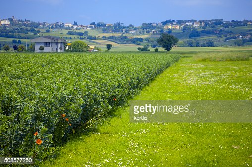 green landscape (green field, Italy) : Stock Photo