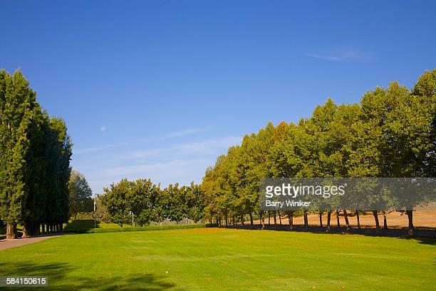 Green lawn & trees below blue sky
