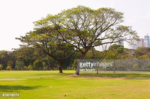 Green lawn with trees in park : Stockfoto