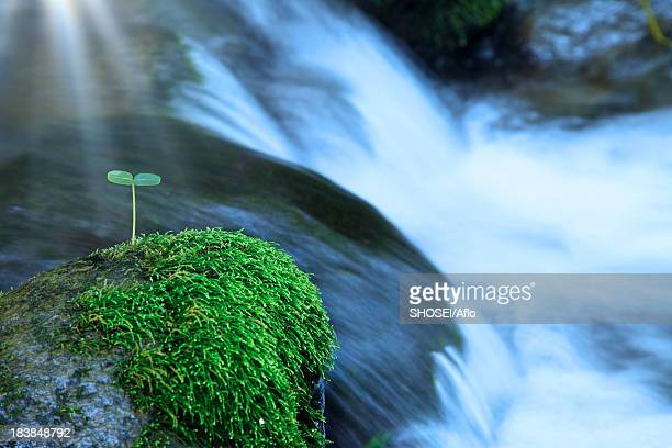 Green leaf and moss