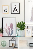 Close-up of green leaf in glass vase on cupboard against the wall with posters in cozy living room
