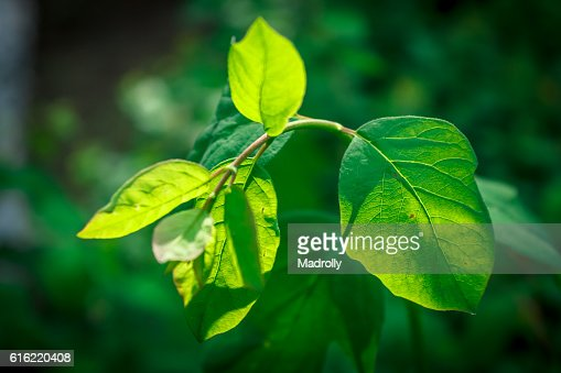 Green leaf in the summer : Stock-Foto