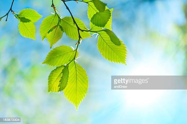 Green leaf gegenüber Sonne und Himmel