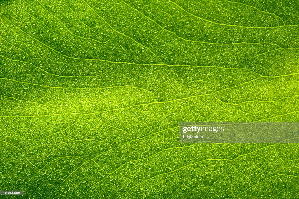 Green leaf : Stock Photo