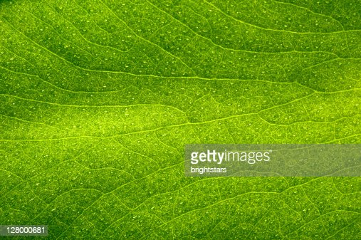 Green leaf : Stock Photo