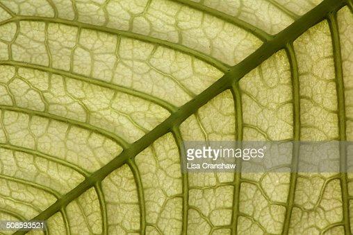 Green Leaf : Foto stock