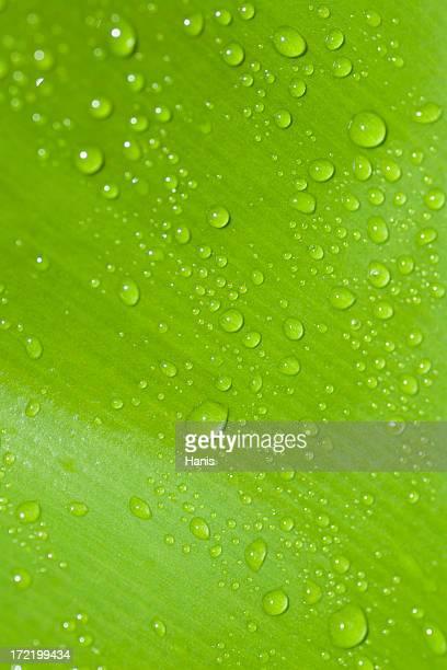 Grünes Blatt-waterdrops