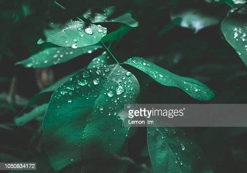 Green leaf with dew on dark nature background. : Foto stock